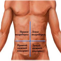 Схема визуального разделения живота на 4 части