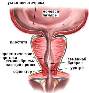 Народные лечения при онкологии желудка