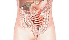 тощая кишка в теле человека