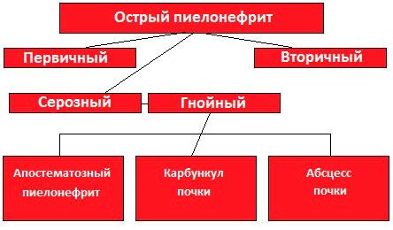 Пиелонефрит схема