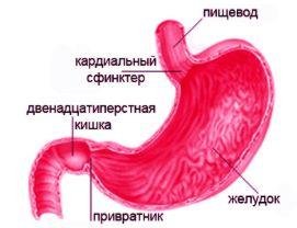 Болит желудок и тошнит и отрыжка